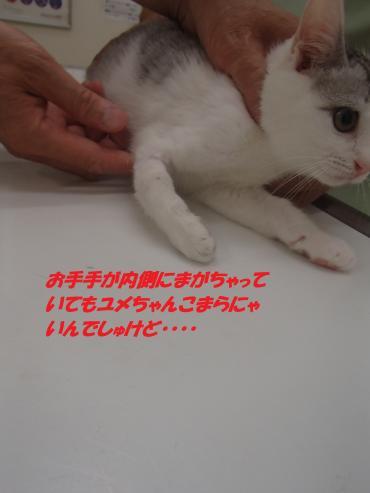 P7090490_convert_20150710130048.jpg