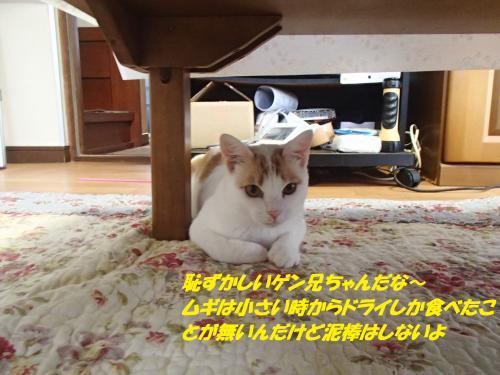 P7100496_convert_20150710130212.jpg