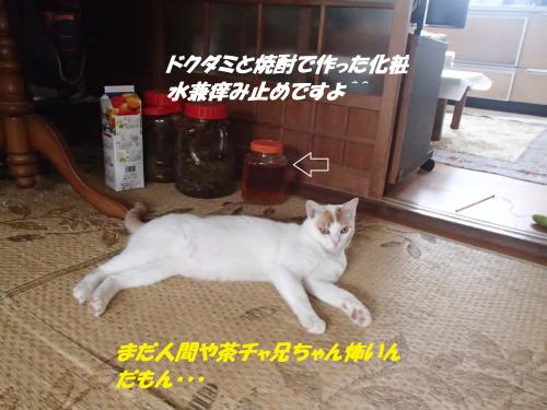 P7100500_convert_20150711084536.jpg