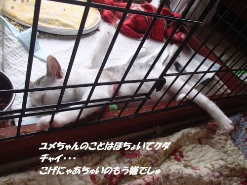 P7110506_convert_20150712093617.jpg
