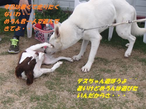 P7110510_convert_20150712093757.jpg