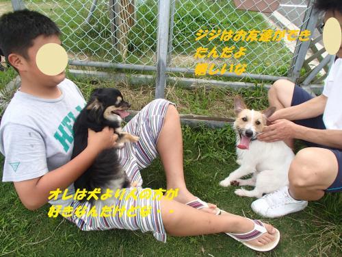 P7110511_convert_20150712093812.jpg
