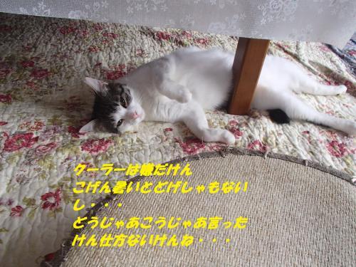 P7120512_convert_20150714081359.jpg