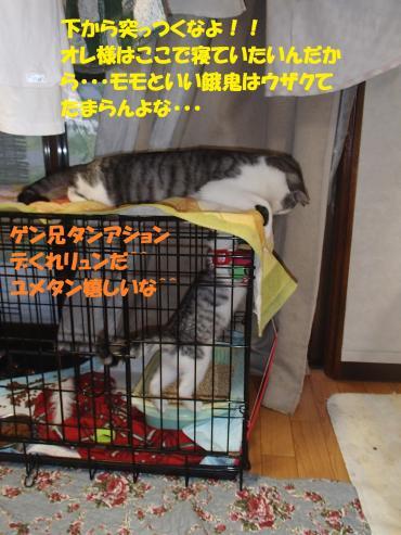 P7170530_convert_20150723135638.jpg