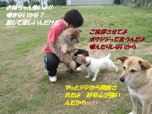 P7170536_convert_20150718095446.jpg