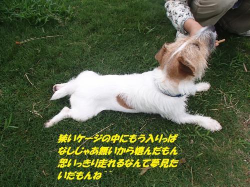 P7170543_convert_20150718095549.jpg