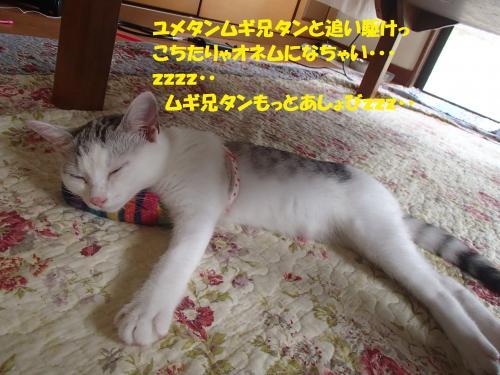 P7210571_convert_20150723135847.jpg