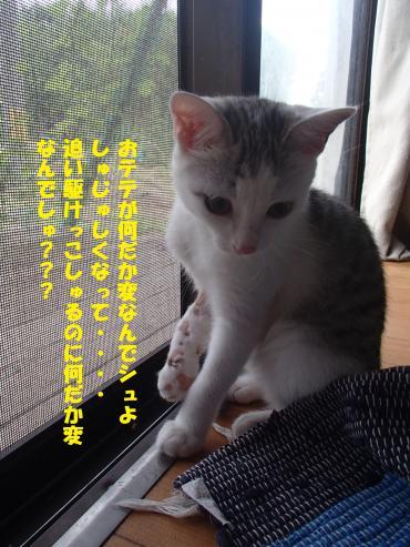 P7230576_convert_20150723135709.jpg