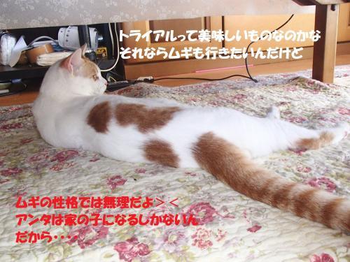 P7260618_convert_20150727134028.jpg