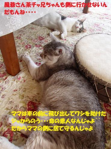 P8020626_convert_20150806094438.jpg