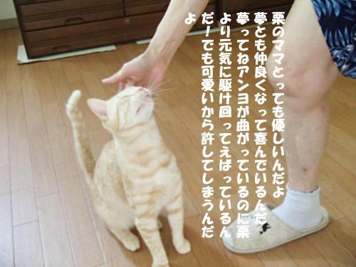 P8040630_convert_20150806094648.jpg