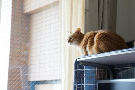 窓から眺めるのが好き