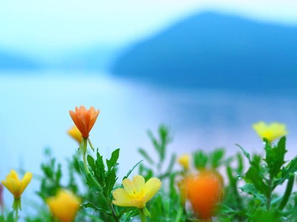 20150702 7月の花