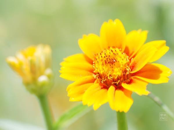 20150720 夏の花