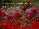tamago_ss66.jpg