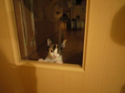 みーちゃん、猫のお部屋はいや