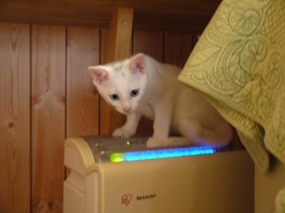 かぎくん、猫ルームに入りました。