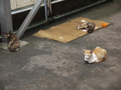 餌やりさんにお世話されている猫達