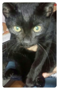 黒猫撮るのは難しい