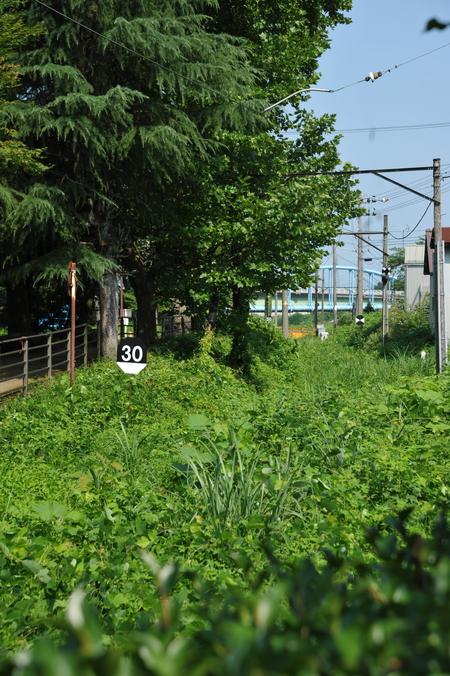 早朝林道ツー (14)