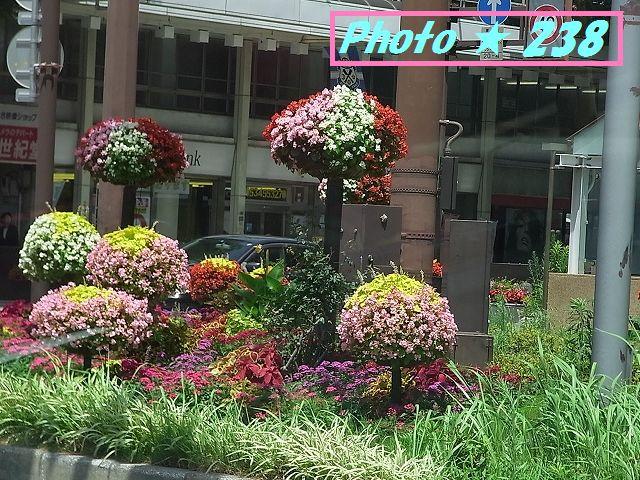 トイザラスの花