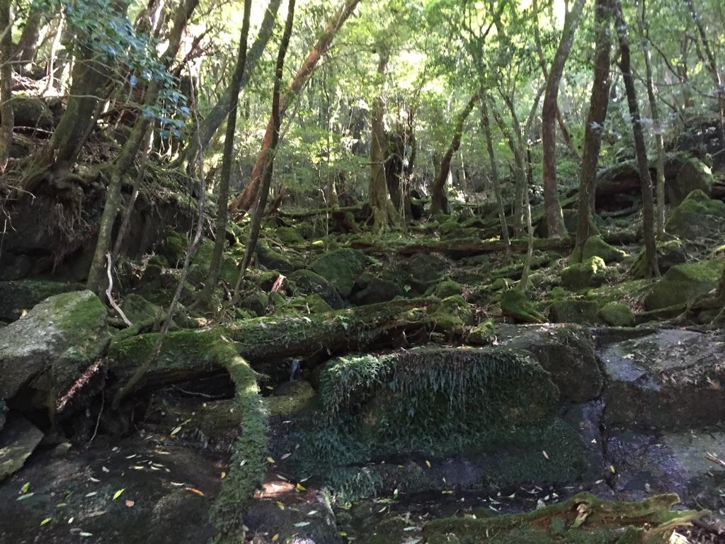 屋久島-3
