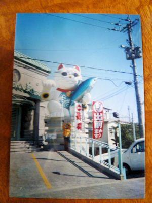 高知市内の巨大招き猫