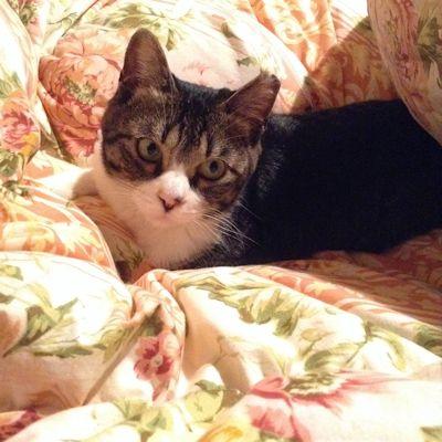 雨の日は布団で暮らす猫