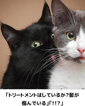 ネコかわええ