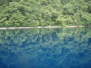 湖岸の原生林