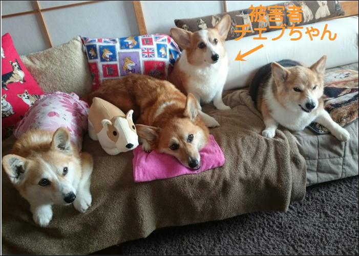 他犬に厳しい2