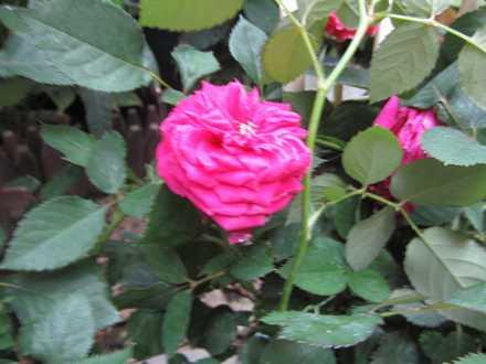 花の湯 2