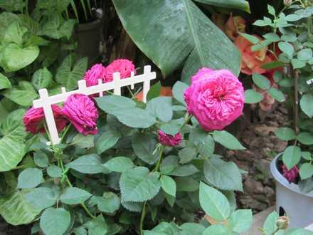 花の湯 4