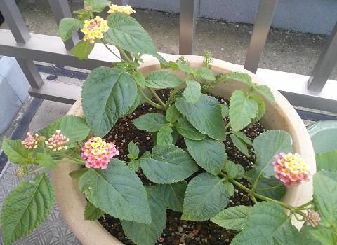 gardening490.jpg