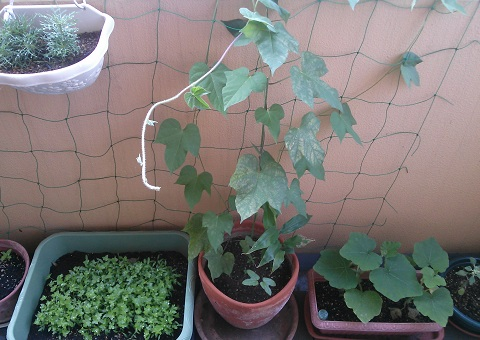 gardening493.jpg