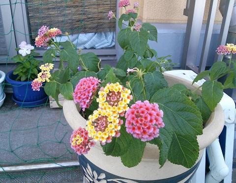 gardening512.jpg
