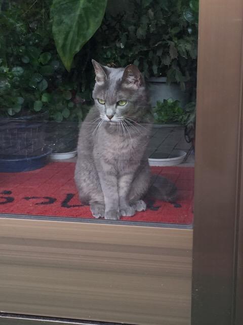 cat0711_2719.jpg