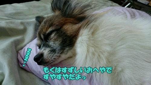 DSC_07890.jpg