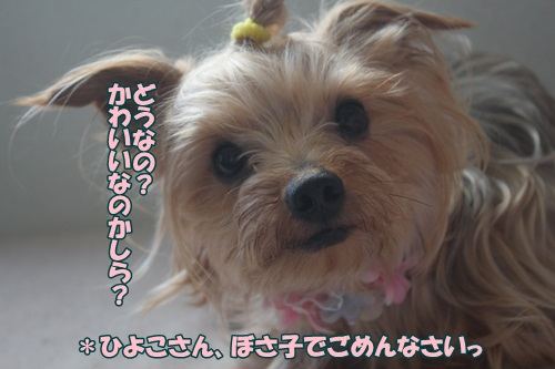 IMG_49900.jpg