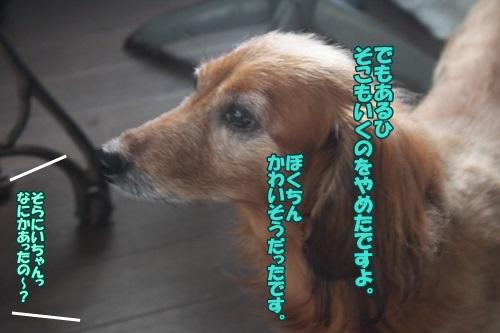 IMG_50340.jpg