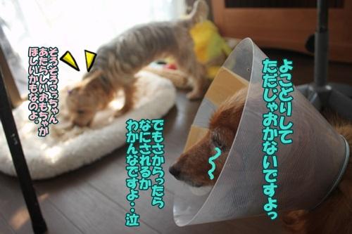 IMG_51440.jpg