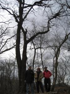 クマが登ったイヌブナの木の下で
