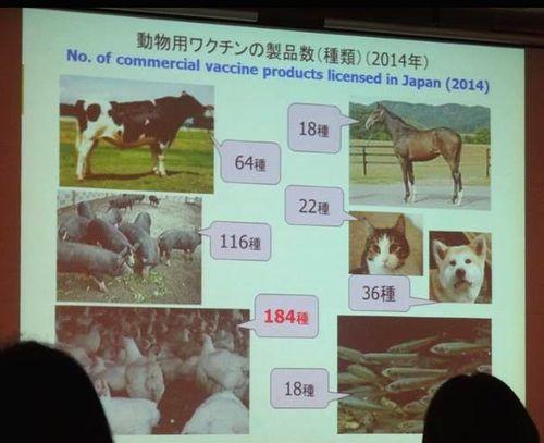 動物用の添加物
