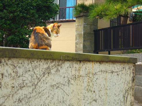 通りすがりに見かけた猫(753)