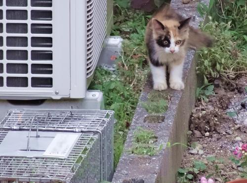 迷子の仔猫?