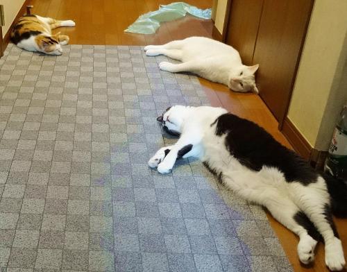 廊下好きトリオ♪