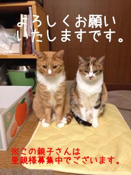 cat_52595_2b.jpg