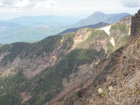 ツクモグサ150530横岳 (22)s