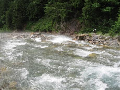 150719-082110-籠川、対岸に沢釣り師さん_R
