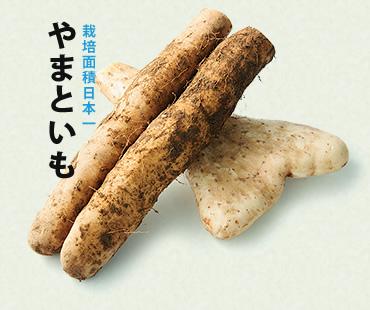 太田のヤマトイモ